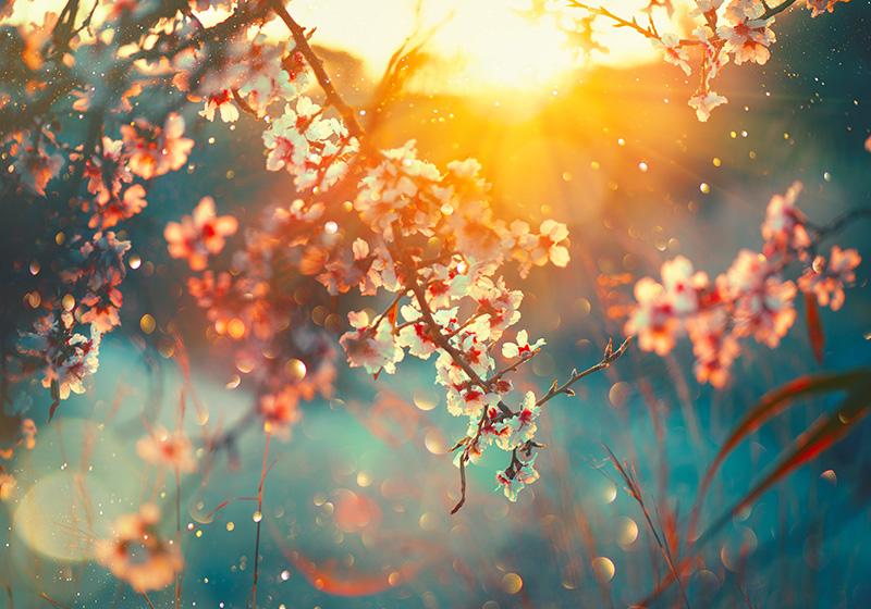 Spring Equinox 2019